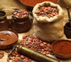 Какао бобы: лечебные свойства и применение